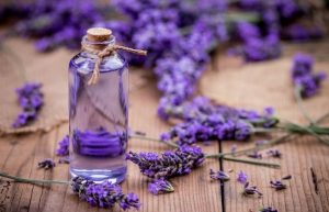 Lavender – A Scent of Freshness